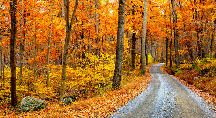 4 Reasons to Buy a Home This Fall! | Simplifying The Market
